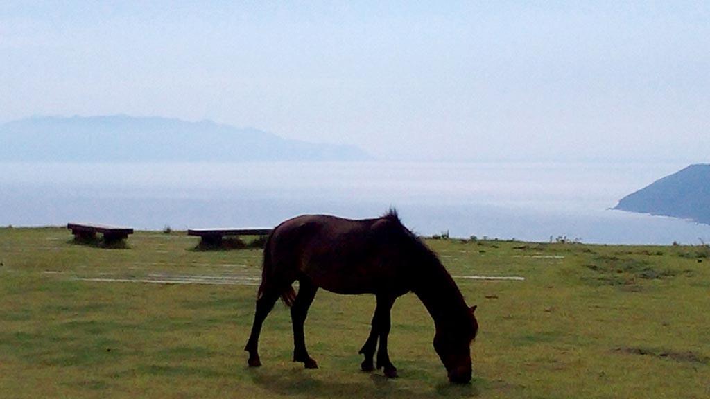 都井岬の高台から、太平洋に面し、串間から志布志への雄大な海岸線が一望できます。