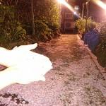 桜吹雪の花小路です。