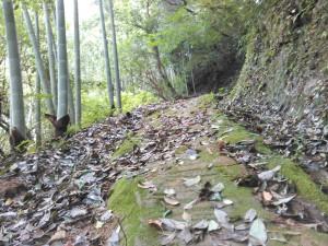苔むした岩で足元が滑る